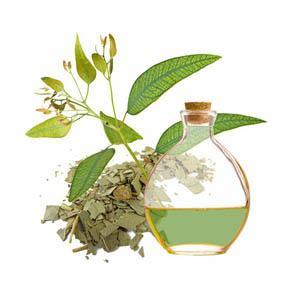 aceite-esencial-de-eucalipto