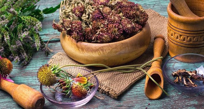 recolectar plantas medicinales
