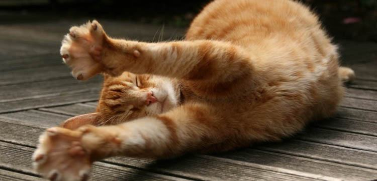 estirar como un gato