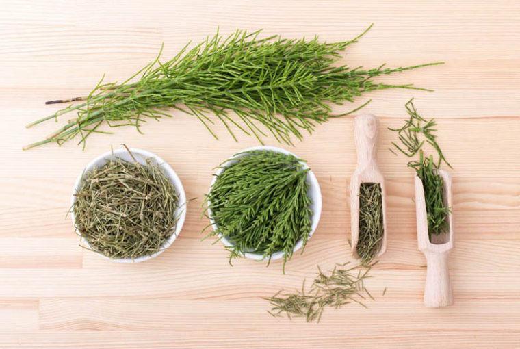 hierbas diuréticas